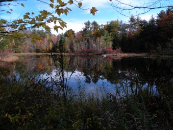 Leaf Peeping In Delaware